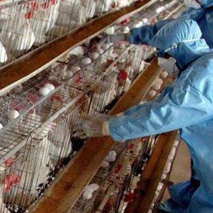 Livestock & Poultry